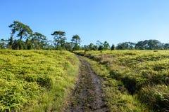 Voie dans la forêt verte Images libres de droits