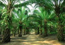 Voie dans la plantation Photos libres de droits