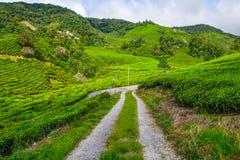 Voie dans la plantation de thé photographie stock