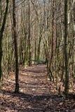 Voie dans une forêt Images libres de droits