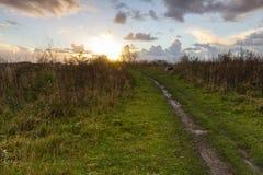 Voie de boue au soleil Photo stock