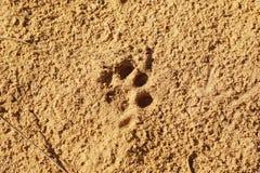 Voie de chat Photo stock