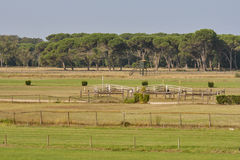 Voie de course de chevaux Photo stock