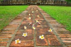 Voie de fleur. Images stock