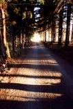 voie de forêt Photos stock