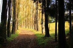 Voie de forêt Photographie stock