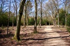 Voie de forêt Image libre de droits