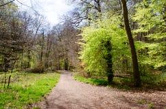 Voie de forêt Image stock
