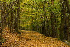 Voie de forêt Images stock