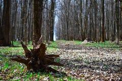 Voie de forêt Photos libres de droits