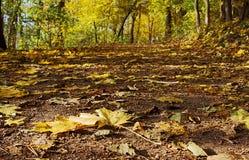 Voie de forêt avec des lames en automne Photos stock