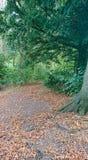Voie de forêt d'automne image stock