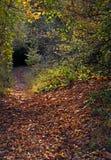 Voie de forêt et arbres automnaux Photos stock