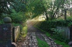 Voie de forêt le matin avec du regain Image stock