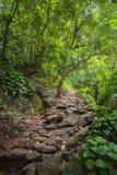 Voie de forêt par les bois épais Image libre de droits