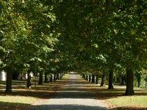 Voie de Forrest en octobre Photographie stock