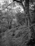 Voie de Hillside photos libres de droits