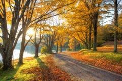 Voie de lac avec les feuilles jaunes Photo stock
