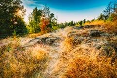 Voie de manière de route de chemin avec des arbres au coucher du soleil en Autumn Forest Photo libre de droits