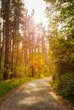 Voie de manière de route de chemin dessus en été Sunny Forest chez le coucher du soleil ou le Sun Photos stock