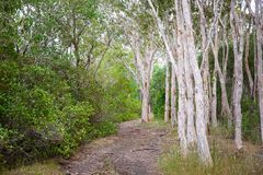 Voie de marche dans Bushland Photographie stock