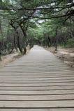 Voie de planche, Corée du Sud Images stock