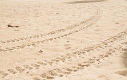 Voie de pneu sur le sable Images libres de droits
