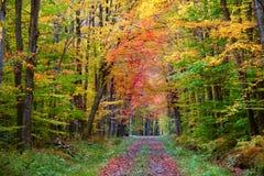 Voie de promenade d'automne image stock