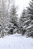 Voie de ski dans la neige profonde entre les arbres Photos libres de droits