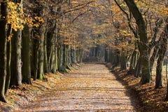 Voie de stationnement dans l'automne Photo libre de droits