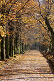 Voie de stationnement dans l'automne Photo stock
