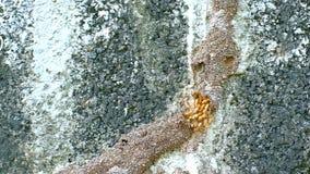 Voie de termites sur le mur banque de vidéos