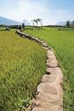 Voie de terres cultivables Photo libre de droits