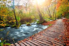 Voie de touristes étonnante dans la forêt colorée d'automne, lacs Plitvice, Croatie photographie stock