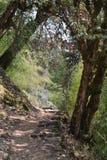 Voie de trekking images stock
