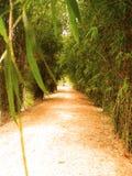 Voie du bambou 7 images stock