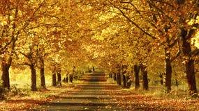Voie en automne Photographie stock libre de droits