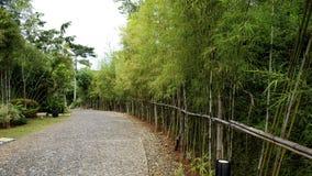 Voie en bambou Images libres de droits