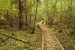 Voie en bois de manière de chemin d'embarquement dans la forêt d'automne Images stock