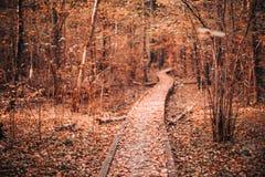 Voie en bois de manière de chemin d'embarquement dans la forêt d'automne Photographie stock libre de droits