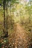 Voie en bois de manière de chemin d'embarquement dans la forêt d'automne Photo stock