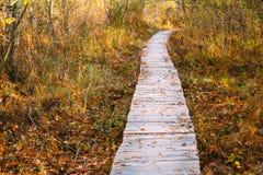 Voie en bois de manière de chemin d'embarquement dans la forêt d'automne Image libre de droits