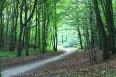 Voie en nature verte de forêt scénique Image libre de droits