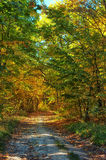 Voie en parc brumeux d'automne Photographie stock