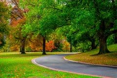 Voie en parc et arbres en automne photo stock