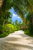 Voie en stationnement tropical photographie stock