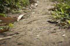 Voie haute étroite de saleté dans la forêt et les feuilles photos libres de droits