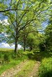 Voie le long des arbres Photo libre de droits