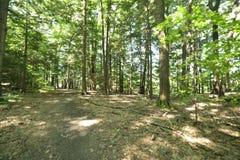 Voie louche dans la forêt photographie stock libre de droits