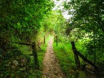 Voie par deux barrières entre les arbres d'une forêt verte Camino d images stock